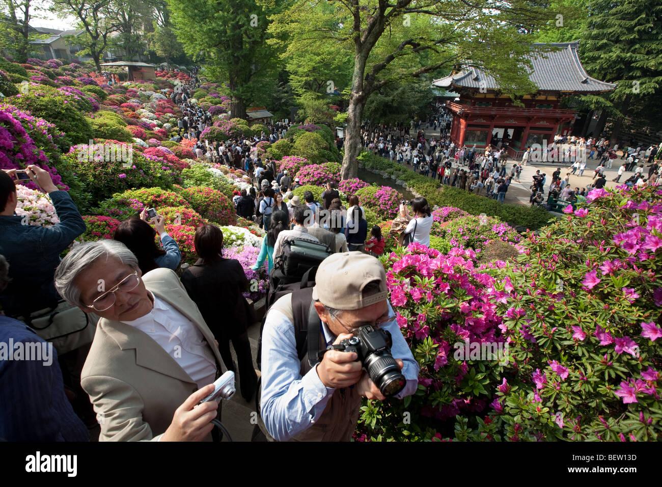'Tsutsuji' festival, Nezu shrine, Tokyo, Japan. Sunday, April 27th 2008. - Stock Image