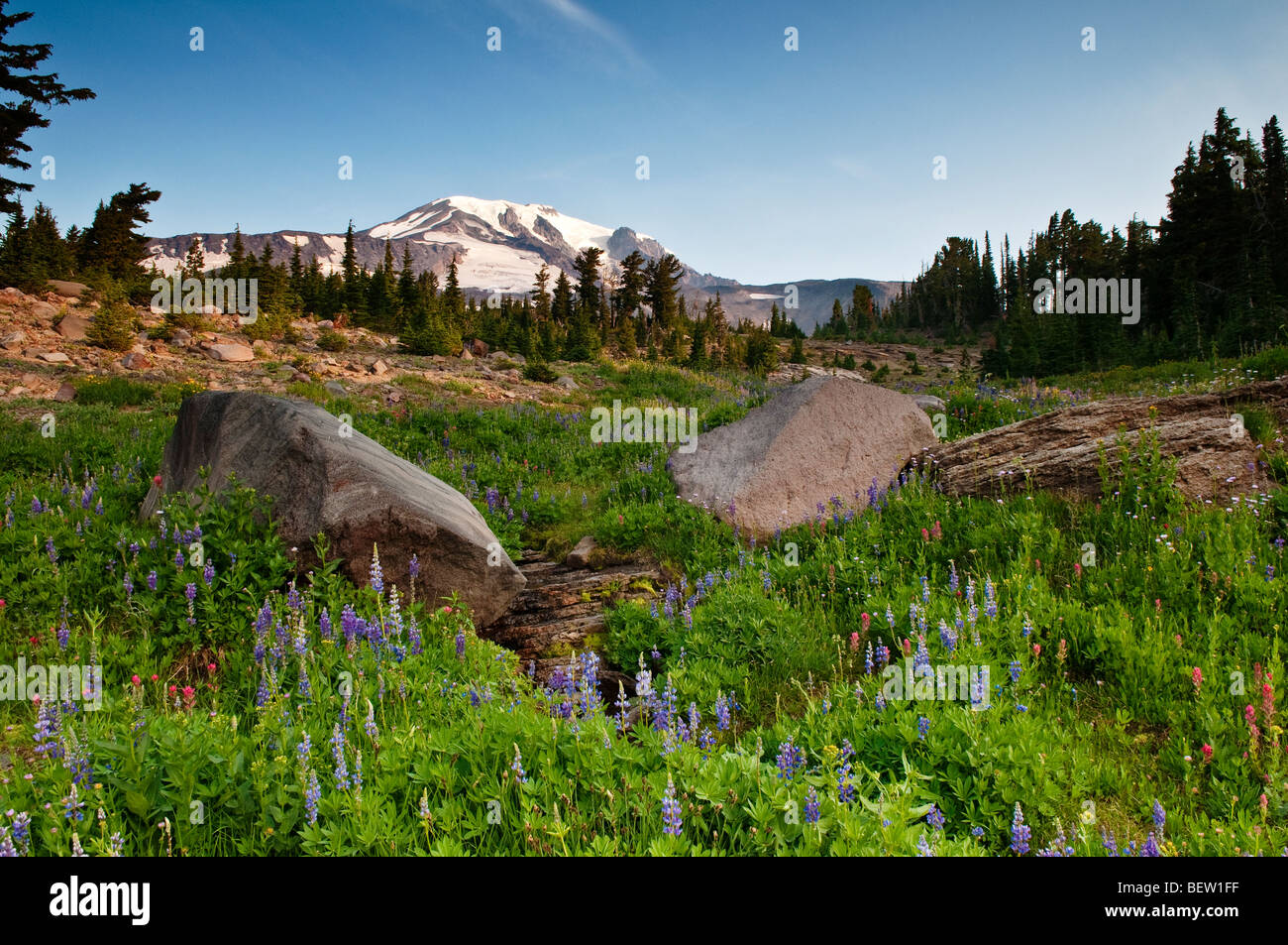 Mount Adams and wildflowers at Bird Creek Meadows Yakama Indian Reservation Washington - Stock Image