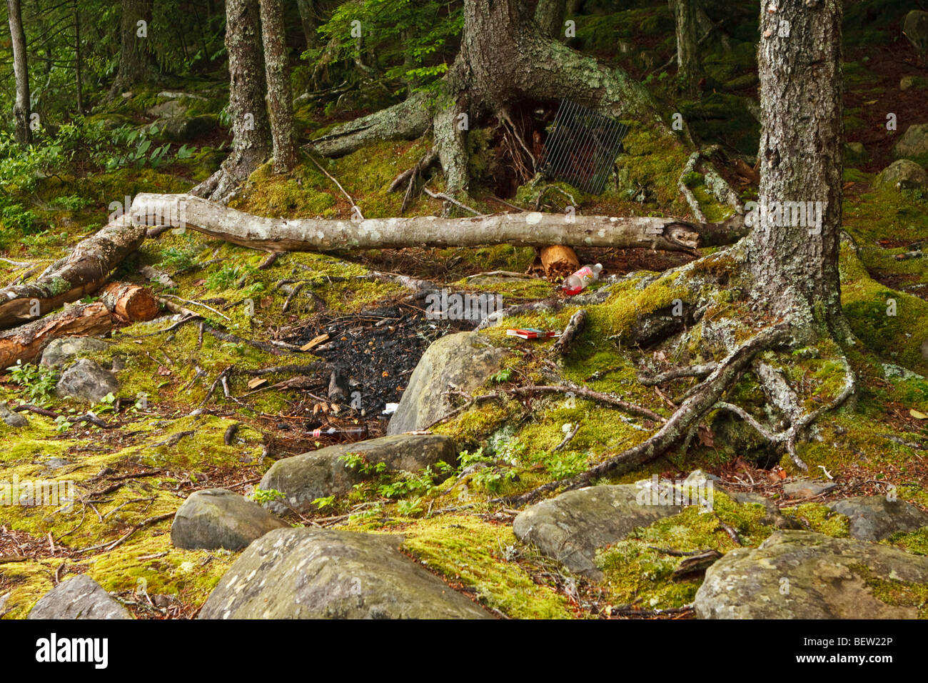 Irresponsible hikers set campfires in forest near residential neighborhood. - Stock Image