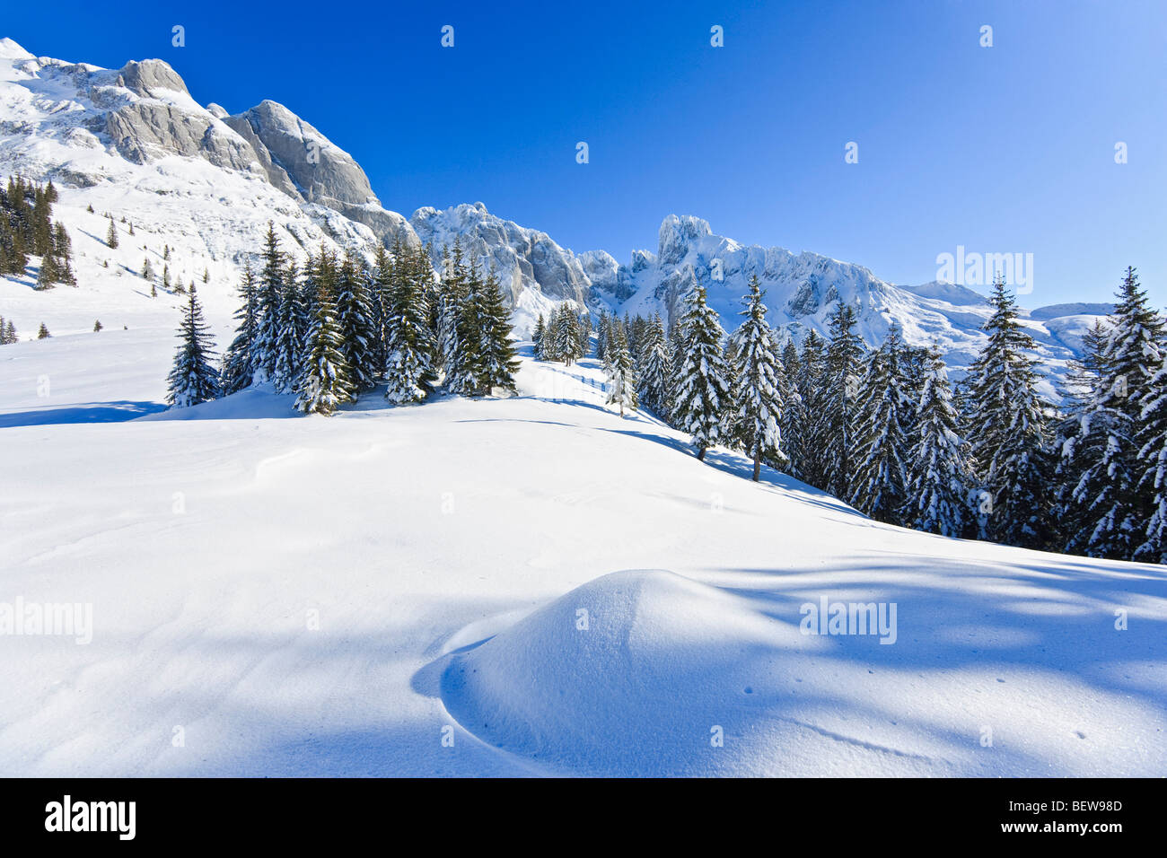 Winter landscape with firs and mountains in the background, Salzburg, Austria - Stock Image