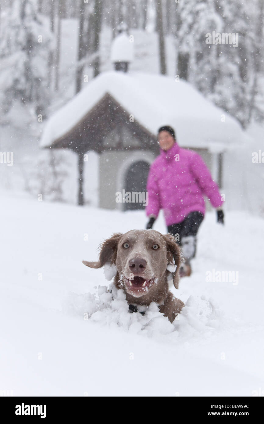 Dog peeking out of deep snow, one person in the background, Elsbethen, Salzburger Land, Austria Stock Photo