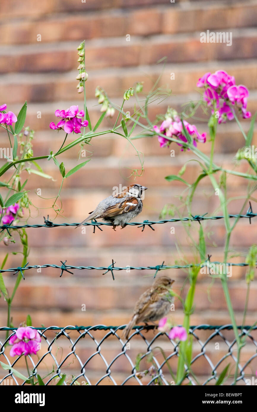 Bird perching on barbed wire fence - Stock Image