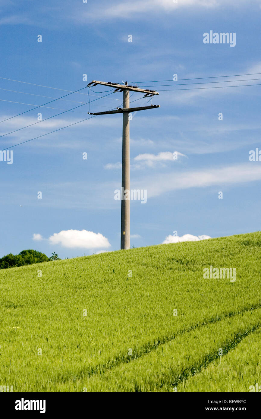 power pole in a cornfield - Stock Image