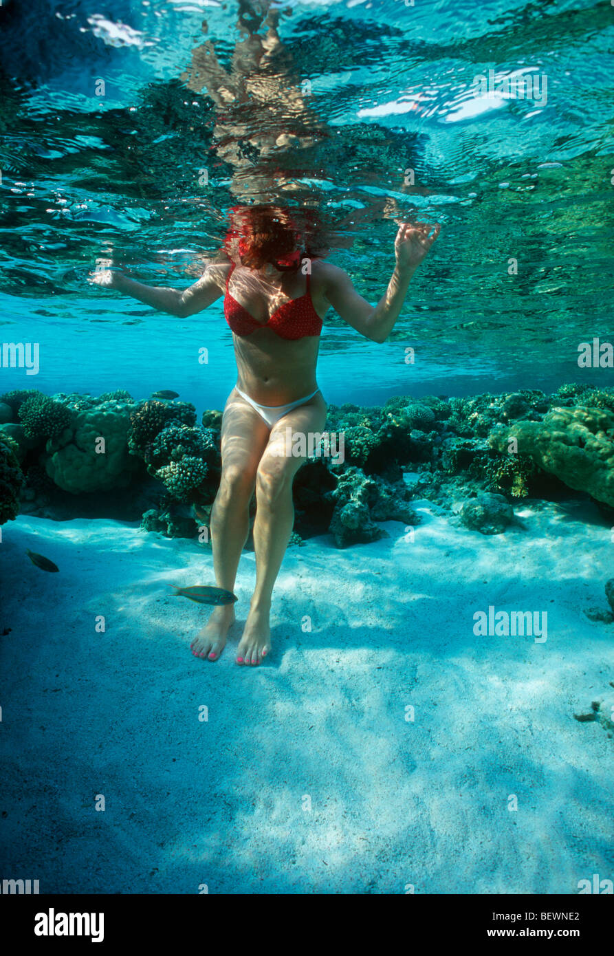 Free diver explores coral reef. Sinai, Egypt - Red Sea - Stock Image