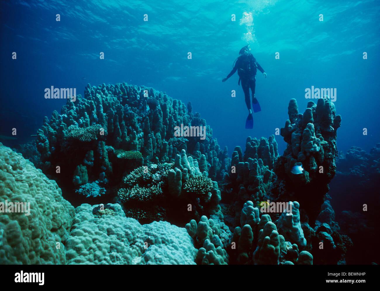 Scuba diver explores coral reef. Sinai, Egypt - Red Sea - Stock Image