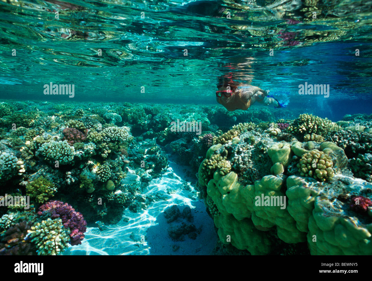 Free diver explores coral reef. Sinai, Egypt - Red Sea - Stock Image