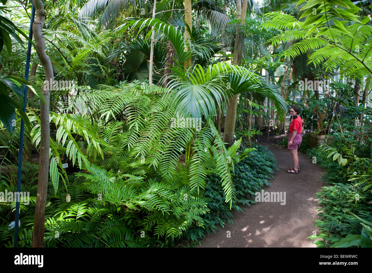 Woman visitor in greenhouse National Botanic Gardens Nationale Plantentuin Meise Brussels Belgium - Stock Image
