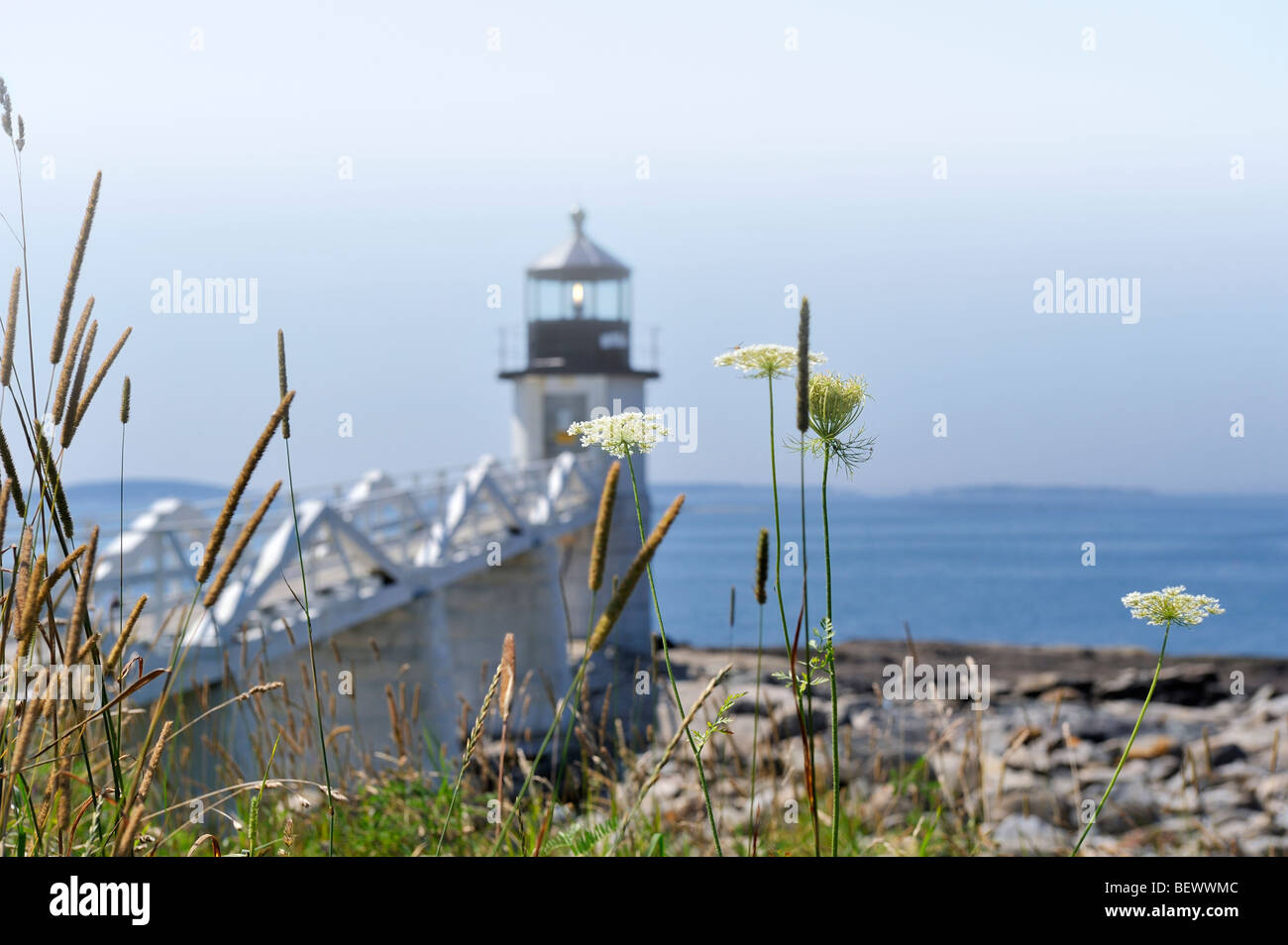 Marshall Point Lighthouse and Penobscot Bay, Port Clyde, Maine, USA seen through  wild grasses, Queen-Anne's Lace Stock Photo