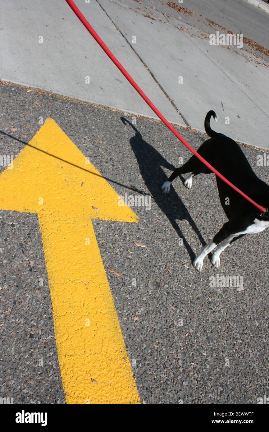 dog going the wrong way - Stock Image