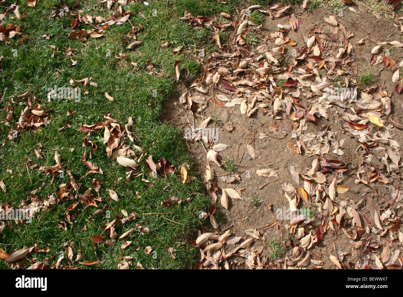 contrast between ground with grass growing, and earth with no grass, brown and green - Stock Image