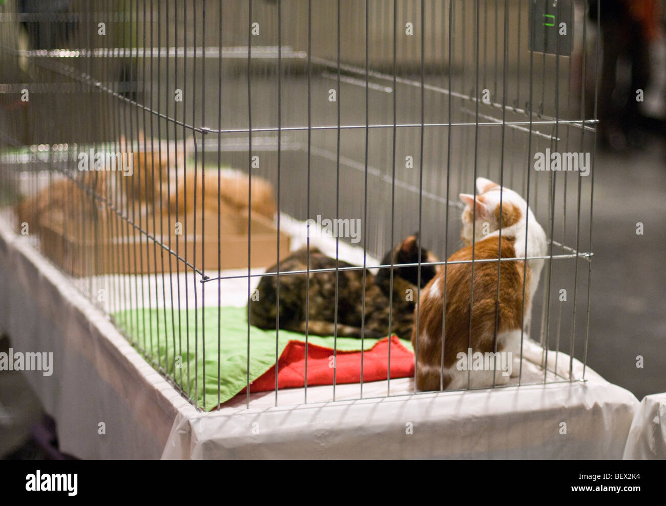 Cats at an animal rescue center waiting to be adopted - Stock Image