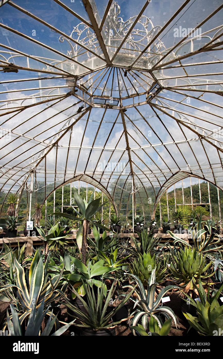 Balat greenhouse National Botanic Gardens Nationale Plantentuin Meise Brussels Belgium - Stock Image