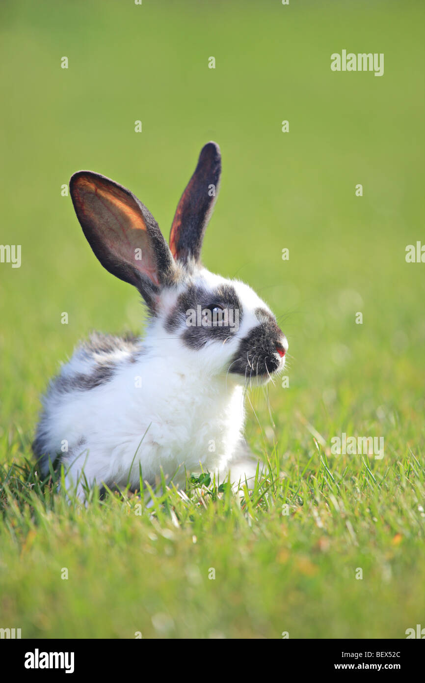 A rabbit on green grass - Stock Image