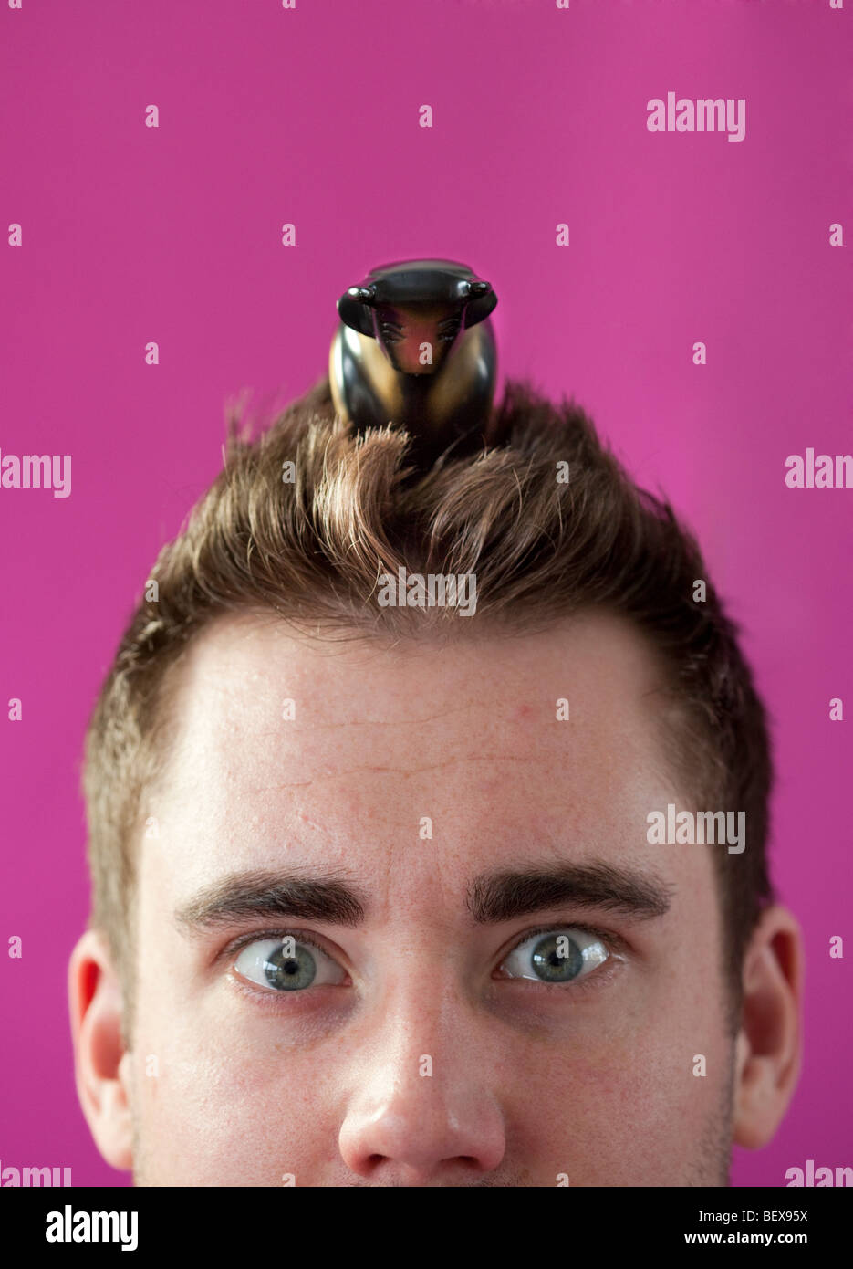 Young man with bull on his head . Stock Photo