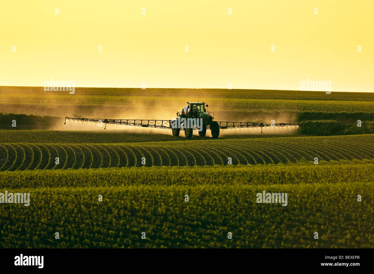 Post-emergent herbicide being applied to an early growth grain corn field by a John Deere sprayer in late afternoon - Stock Image
