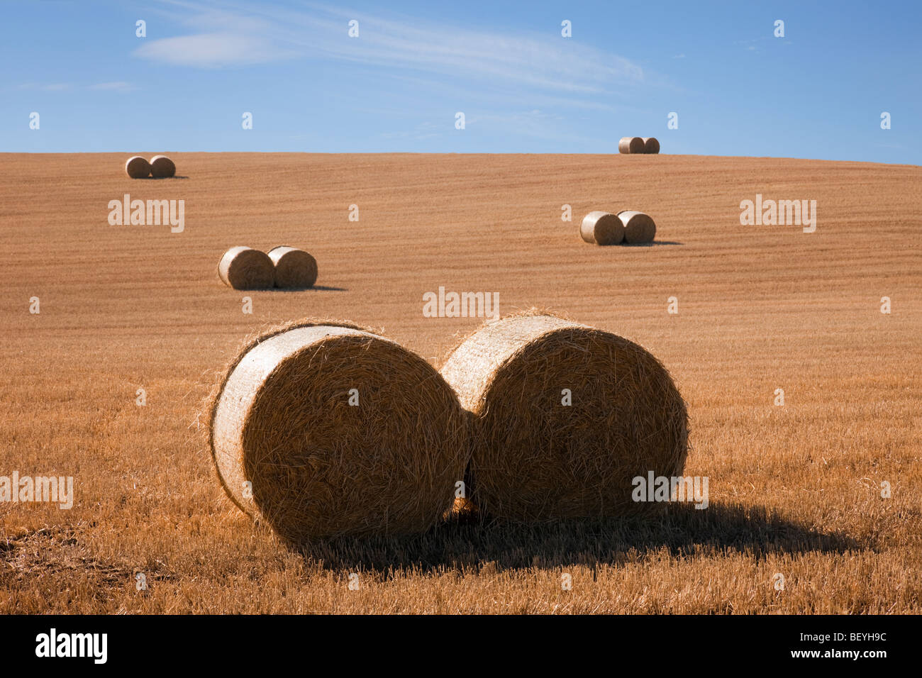 Country scene pairs of round straw bales in a harvested wheat field on a farm during September harvest season in - Stock Image