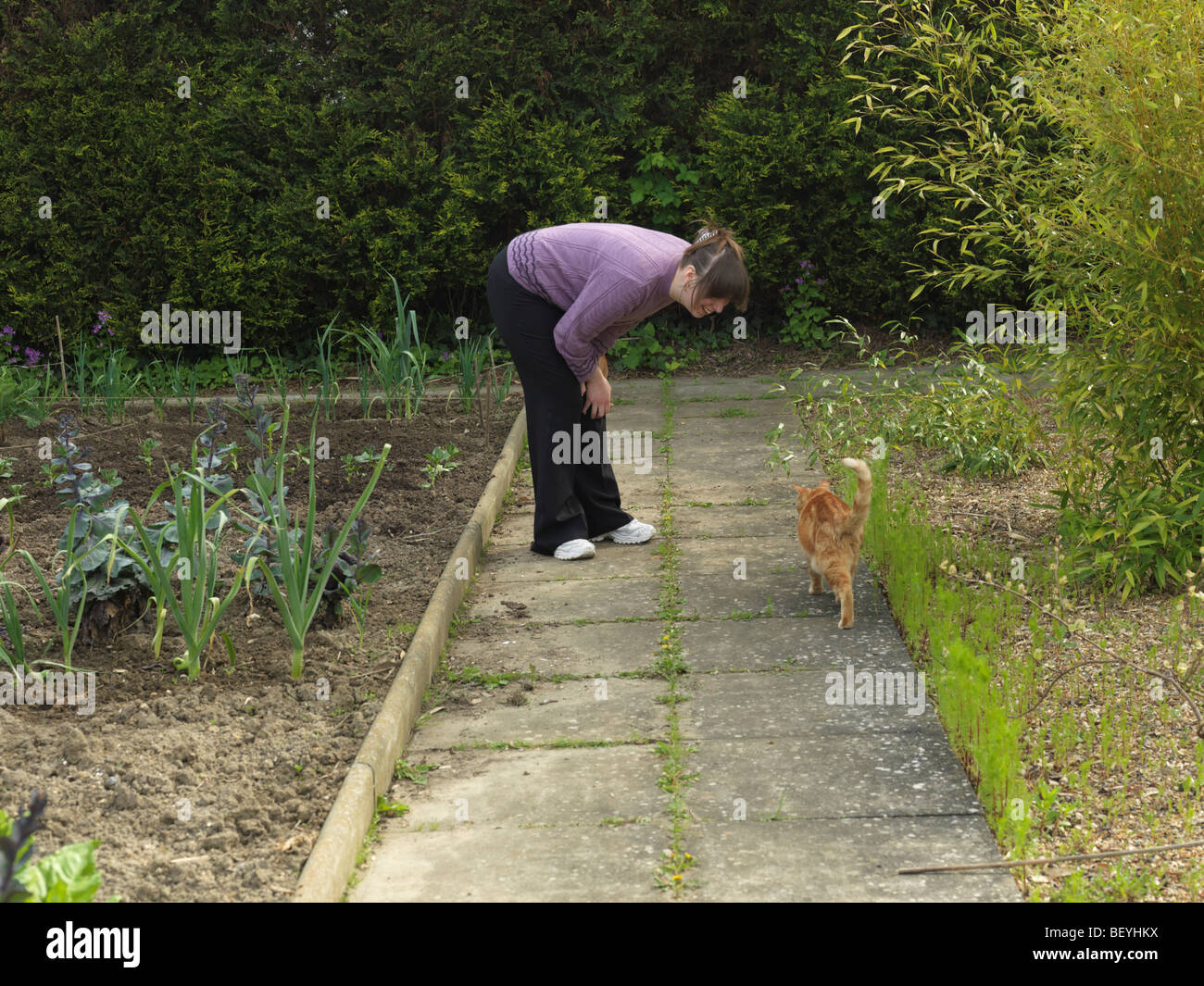 Ginger Red Tom Cat Greeting With Tail In the Air - Stock Image