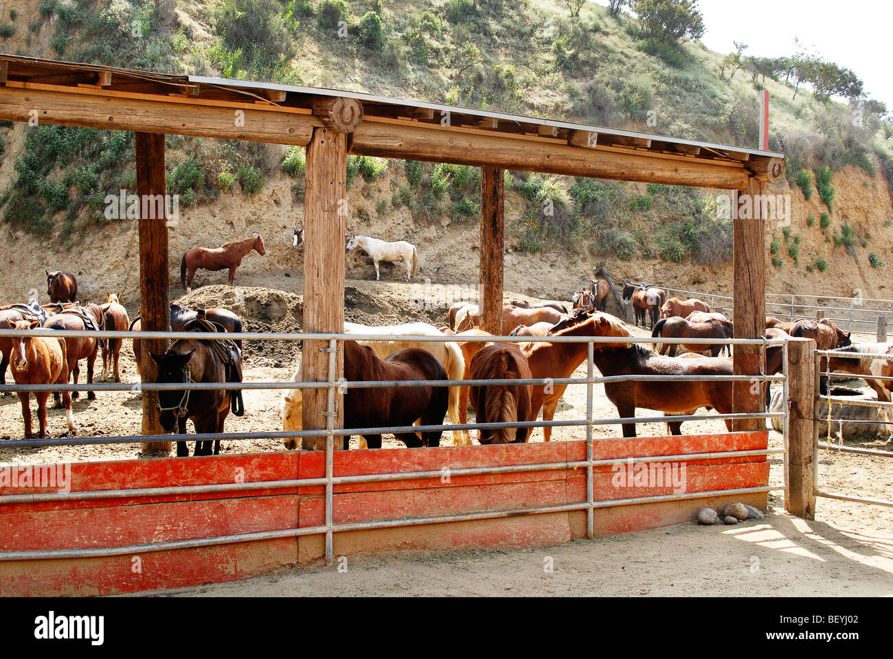 A crowd of horses await in a corral of horses to be ridden. Photo taken 01APR09 in Hollywood, Calif. - Stock Image