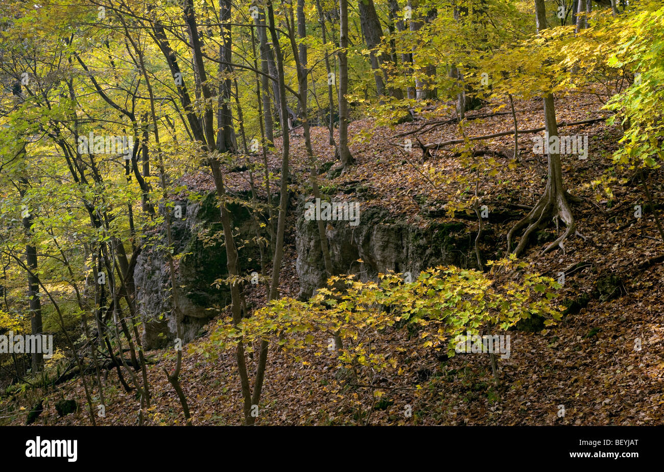 wooded bluff in autumn, Effigy Mounds National Monument, Iowa - Stock Image