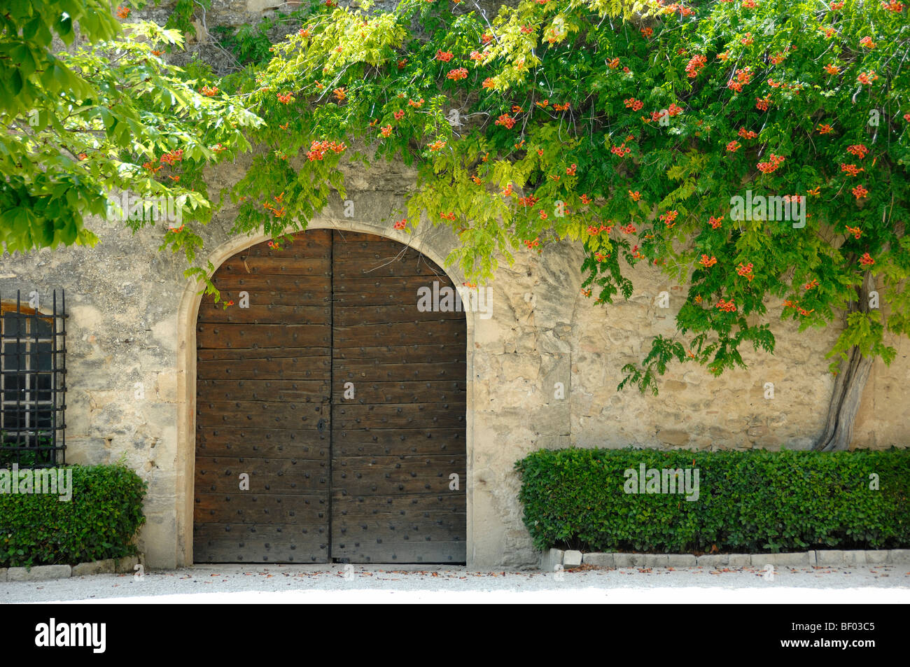 Trumpet Vine or Creeper Growing Around Old Garage Door at Ansouis Castle or Château Luberon Regional Park Provence - Stock Image