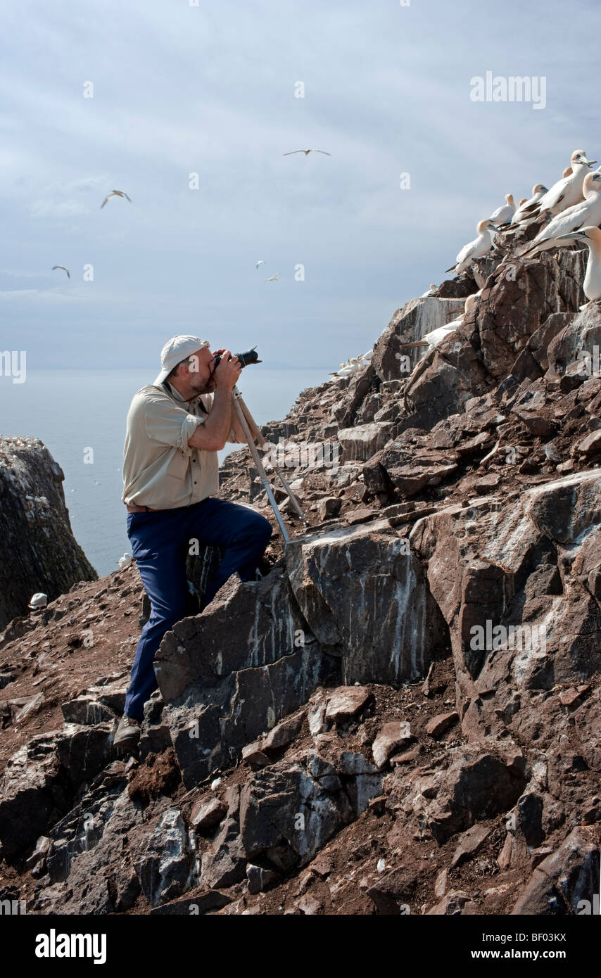 Photographing the gannets on Bass Rock, Scotland - Stock Image