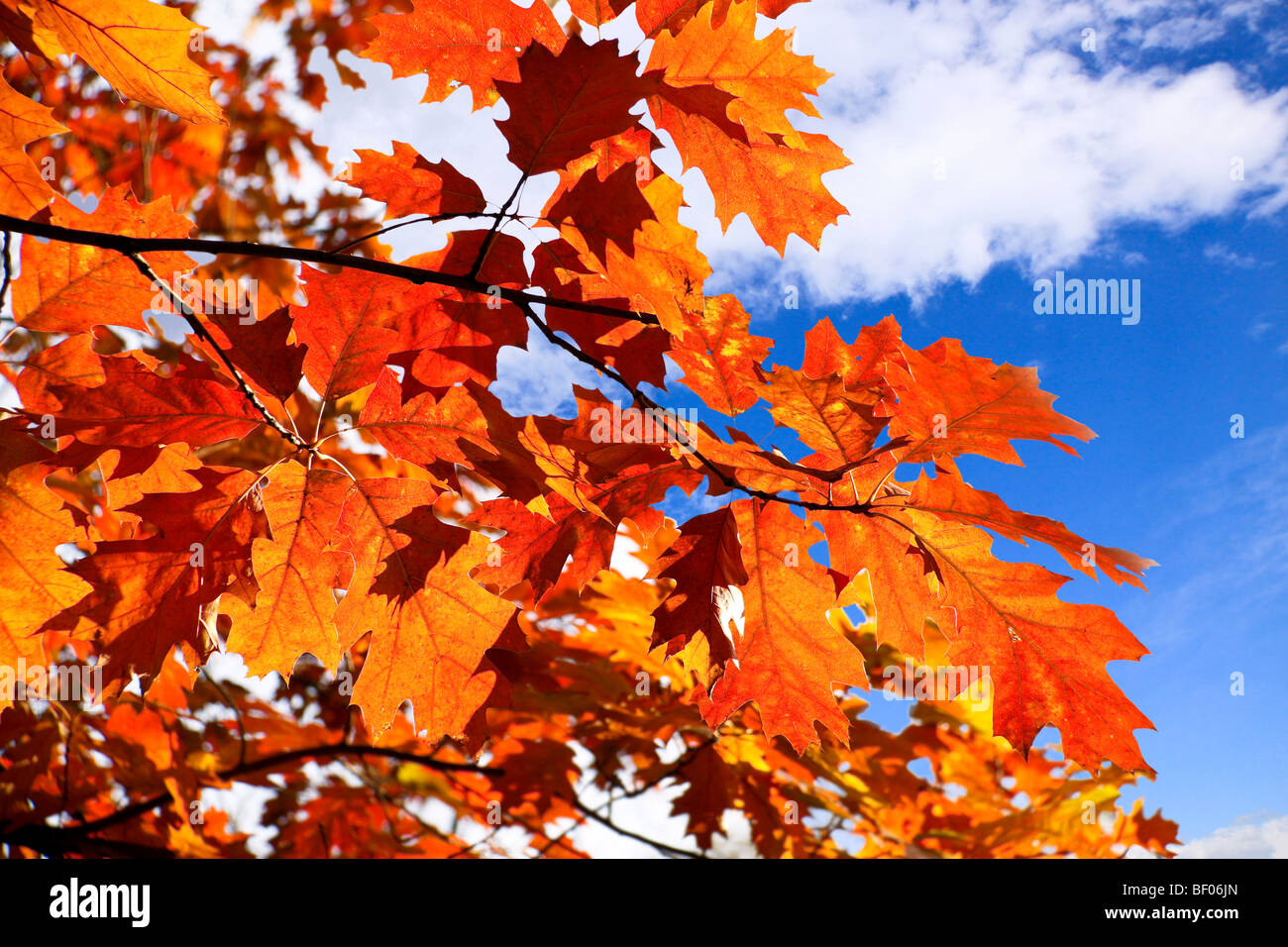 the autumn has come also leaves on trees have become red and yellow Stock Photo