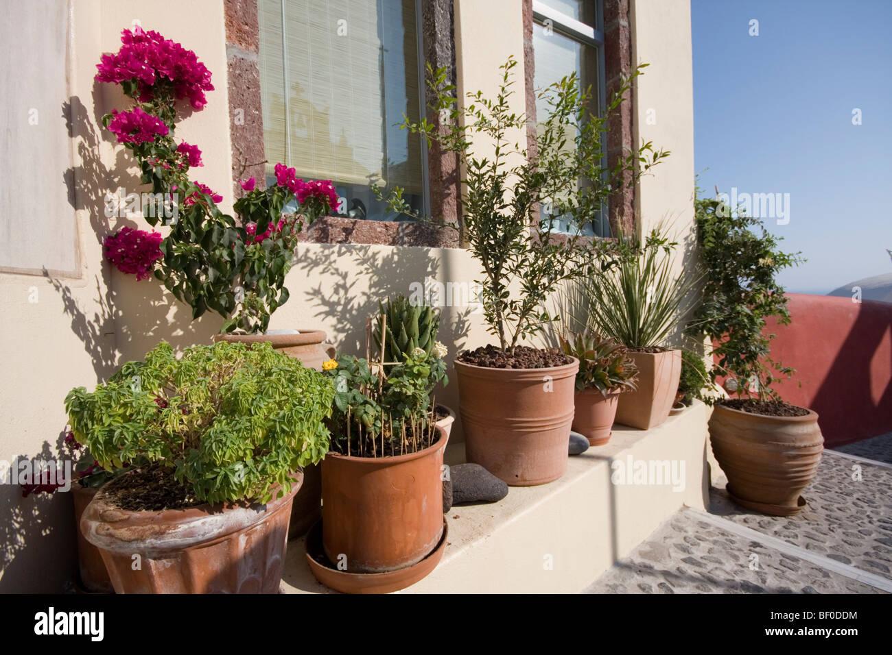 Plants On Window Sill Stock Photos & Plants On Window Sill Stock ...