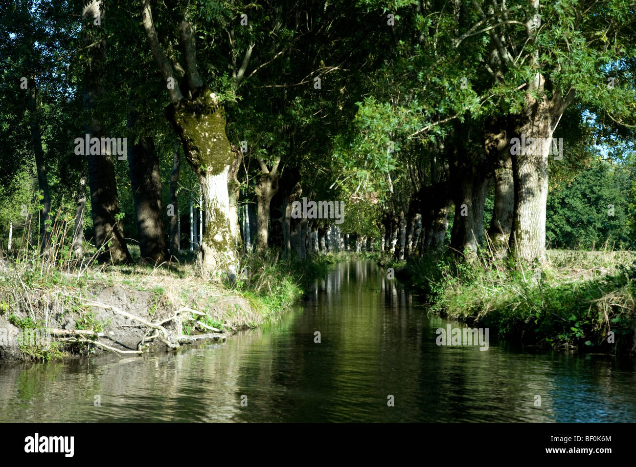 In the watery network that is France's Marais Poitevin it would be easy to get lost - Stock Image