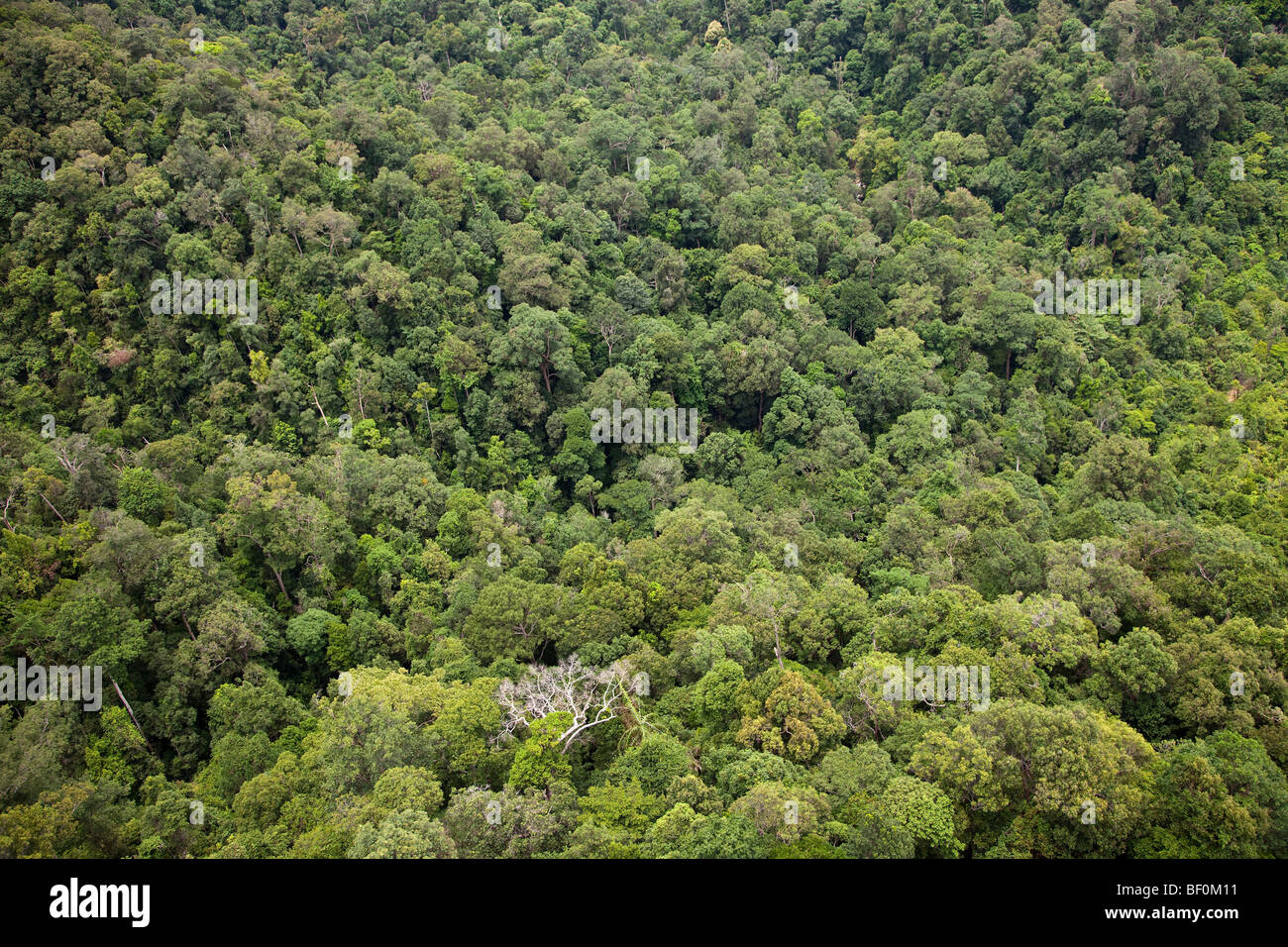 Aerial view of secondary forest canopy, Malaysia - Stock Image