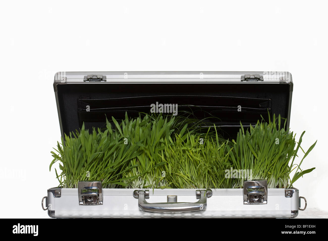 Wheatgrass growing out of a briefcase - Stock Image