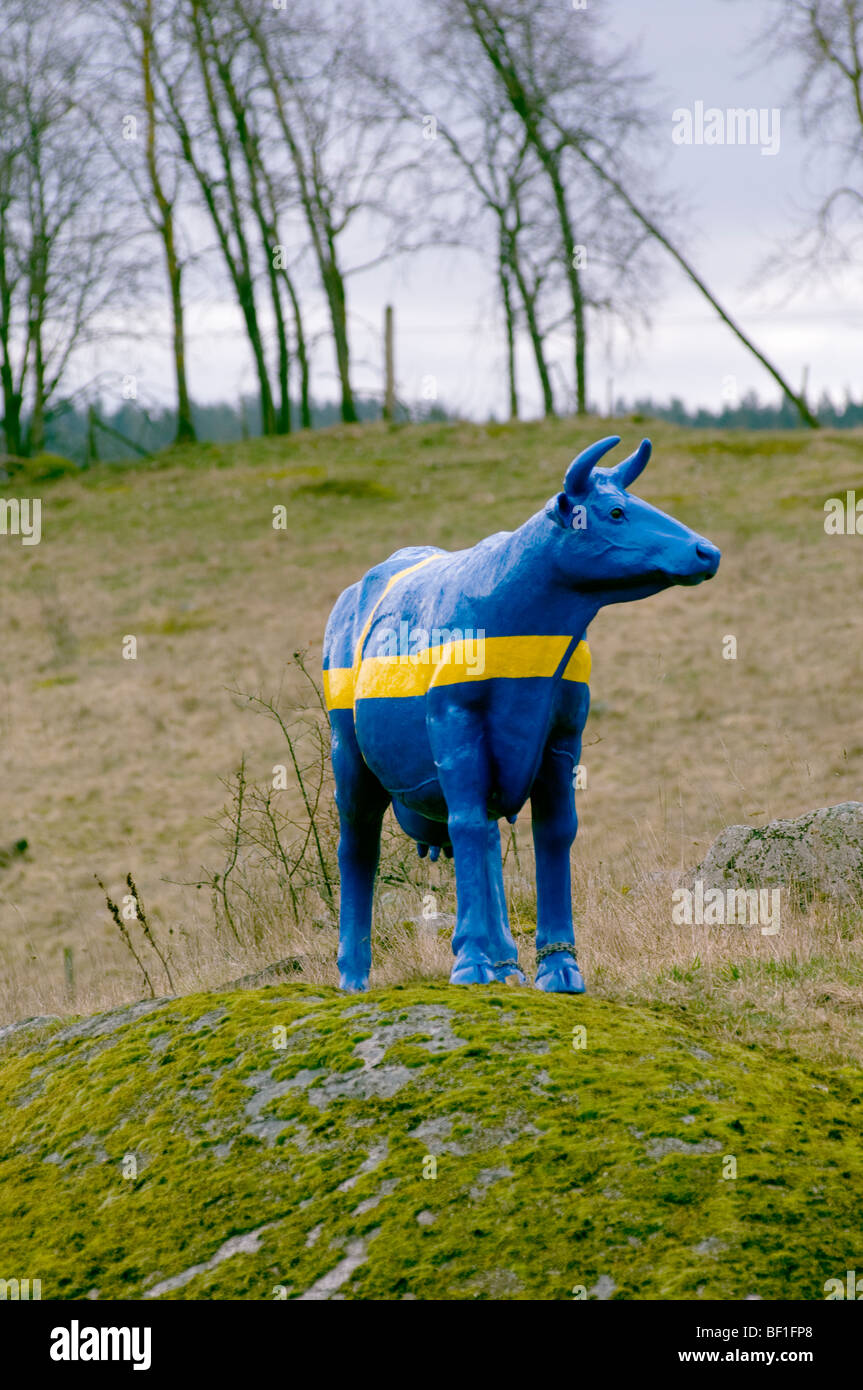 A cow painted as the Swedish flag, Sweden. - Stock Image