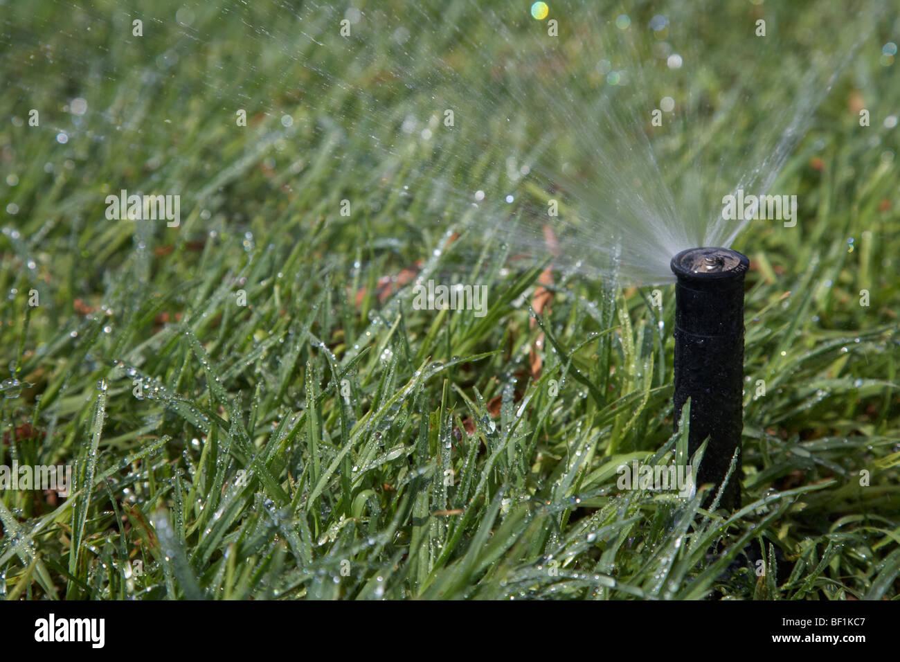 garden grass water sprinkler spraying water over grass - Stock Image