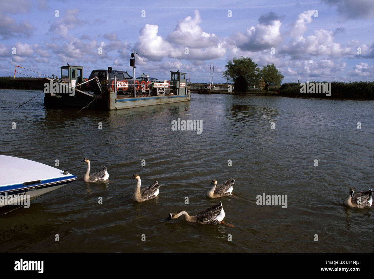 Reedham Ferry Norfolk Broads - Stock Image