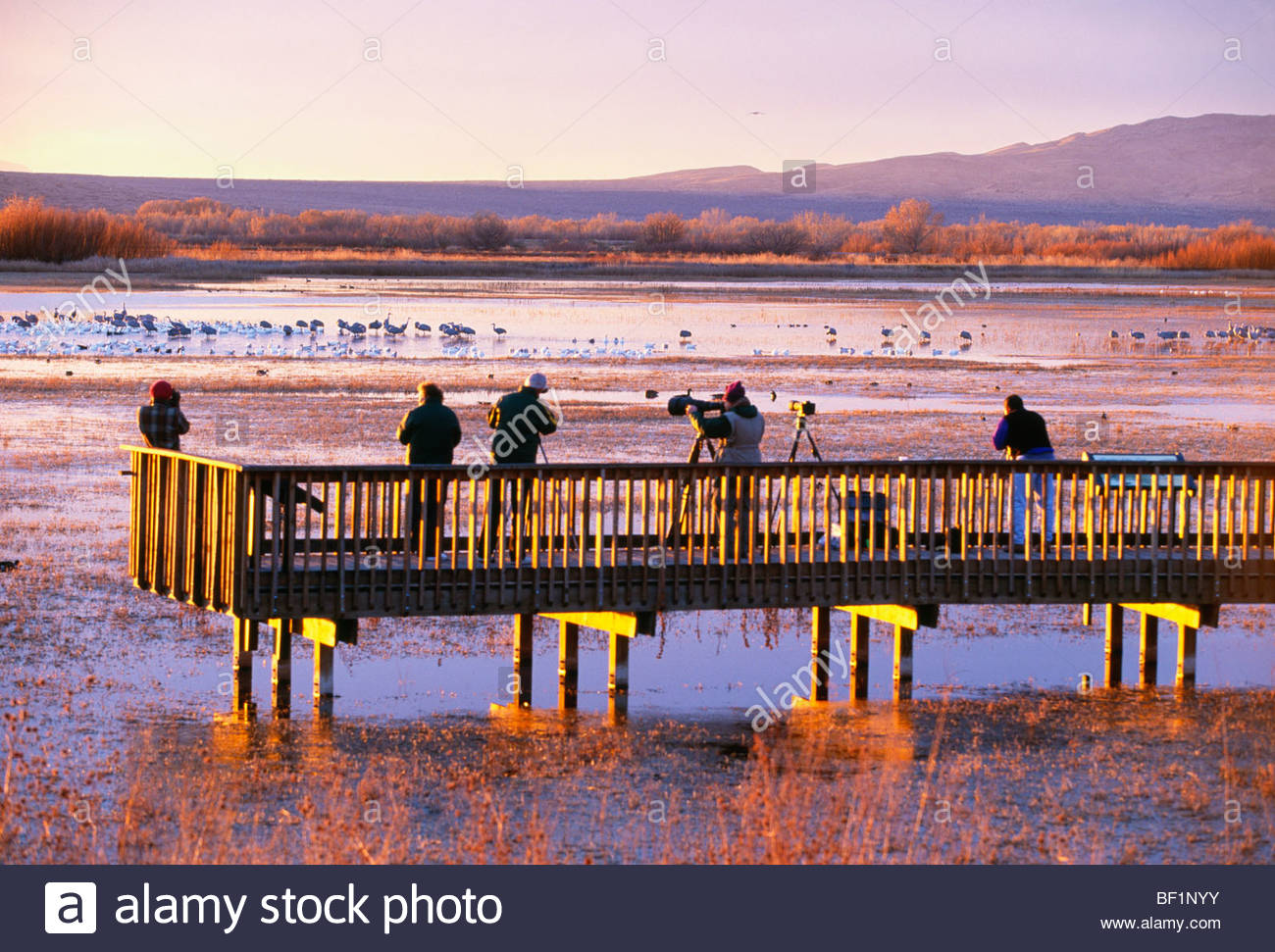 'Bird watchers' at sunrise with 'sandhill cranes' and 'snow geese'. [Bosque del Apache National - Stock Image