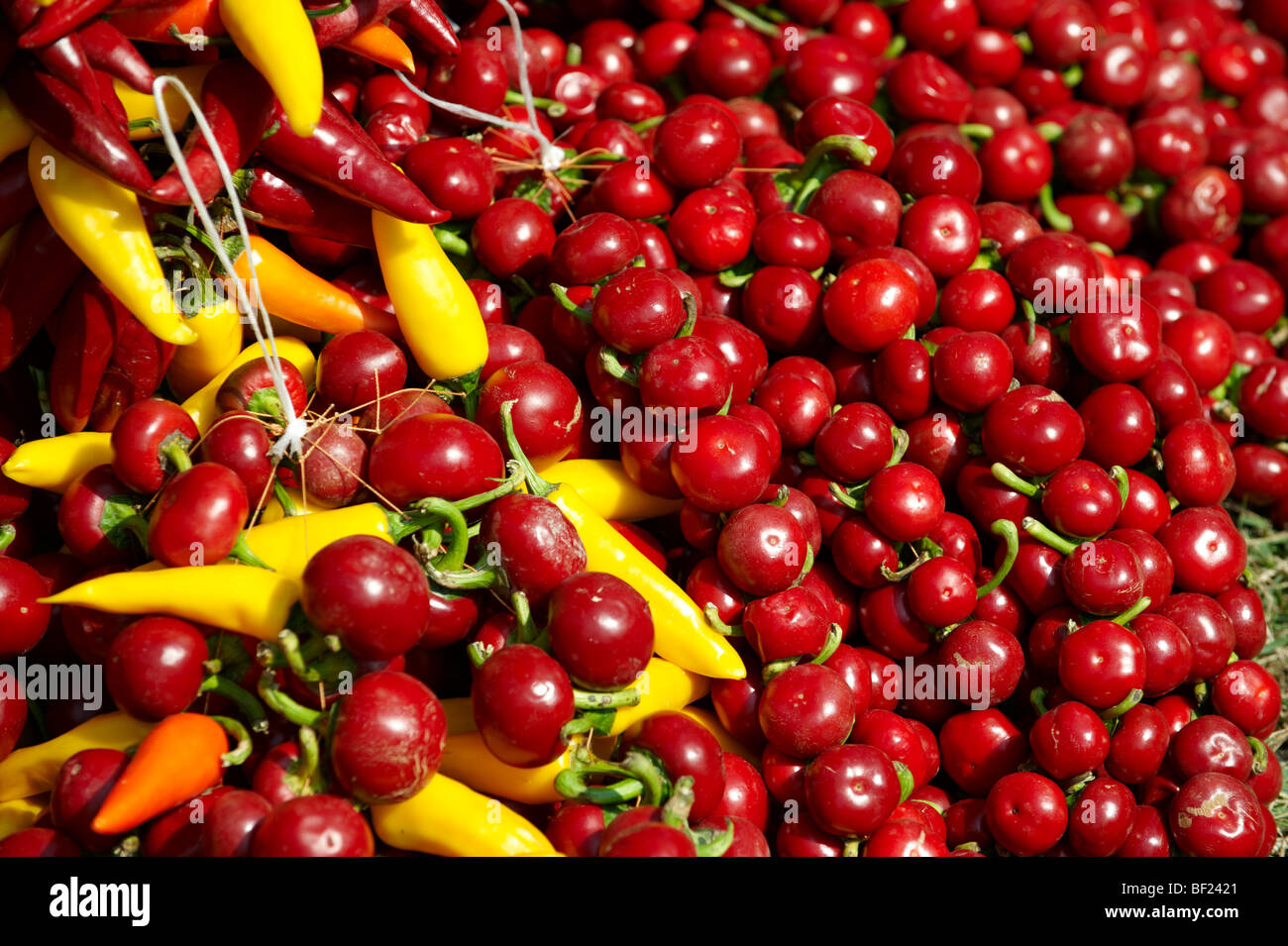 Capsicum annuum or chili peppers drying to make Hungarian paprika - Hungary - Stock Image