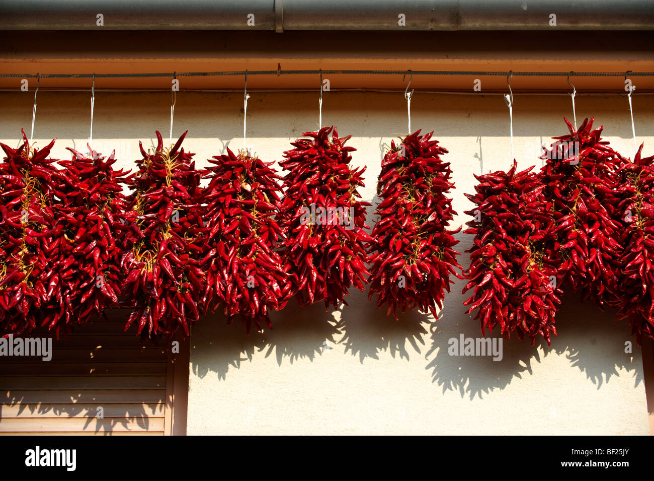 Capsicum annuum or chili peppers air drying to make Hungarian paprika - Kalocsa Hungary - Stock Image