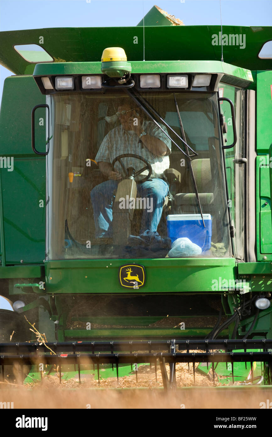 Agriculture - A farmer talks on his cell phone in the cab of a combine while harvesting soybeans / Northland, Minnesota, - Stock Image