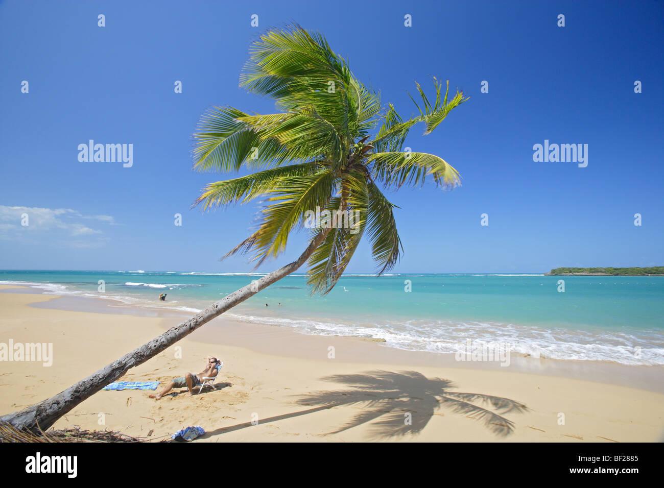 Man and palm tree at Tres Palmitas beach under blue sky, Puerto Rico, Carribean, America - Stock Image