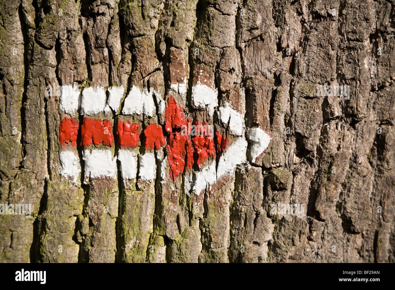 arrow on the tree - Stock Image