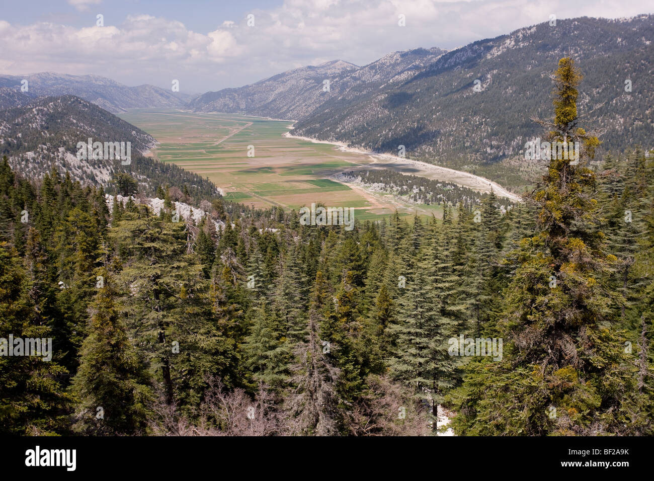 Drained former lake, Lake Golovasi, surrounded by fir and cedar forest; in the Taurus Mountains, south Turkey. - Stock Image