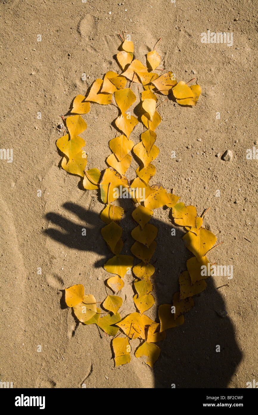 dollar in the autumn - leafs - crises - Stock Image