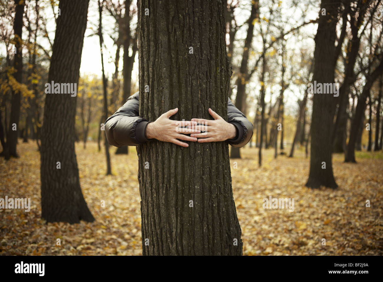 tree and hands of man ,special toned photo f/x, selective focus on hands Stock Photo