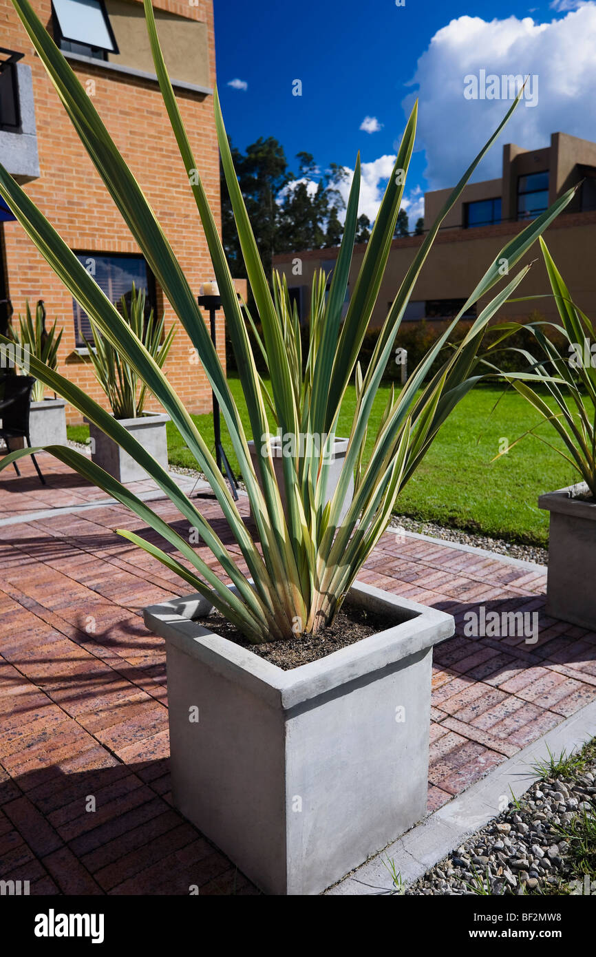 Potted plants at front or back yard - Stock Image