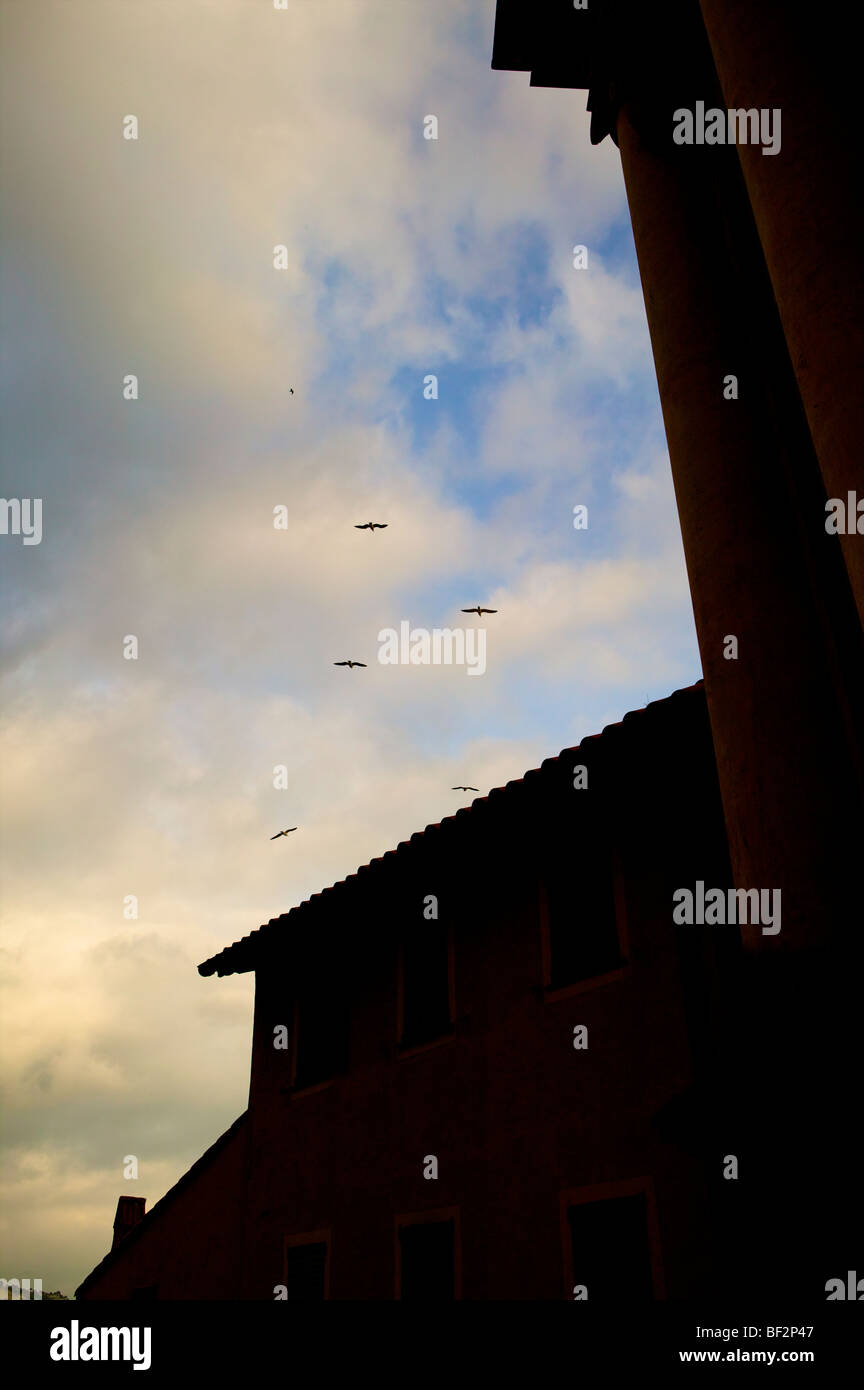 Seagulls in the Sky above Menton South of France Cote De Zure abstract - Stock Image