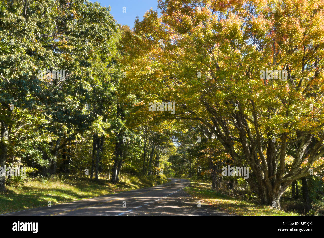 Soft Focus of Fall colours on Skyline Drive, Shenandoah National Park, Blue Ridge Mountains, Virginia, USA - Stock Image