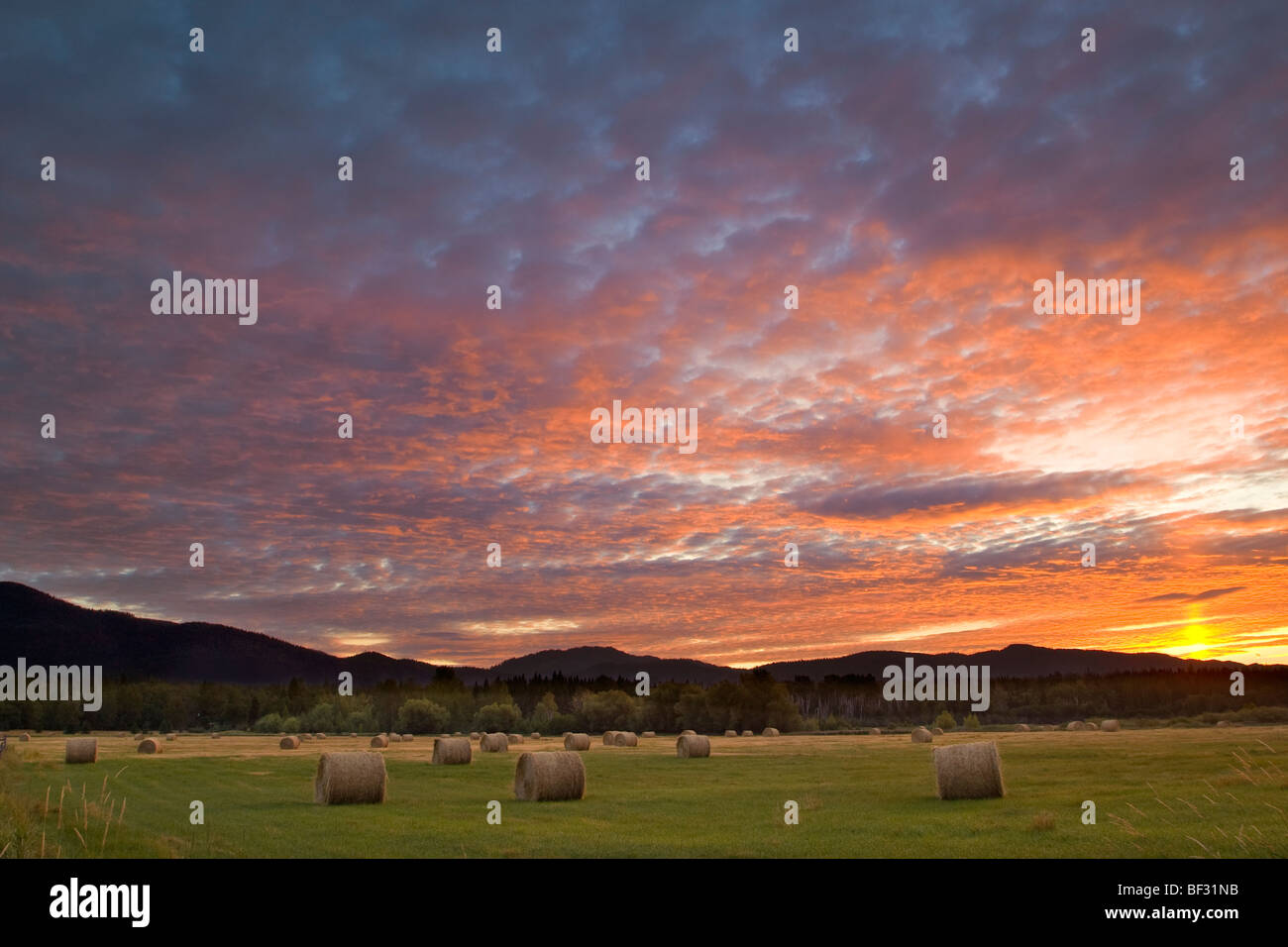 Agriculture - Vivid sunrise over a field with round hay bales and the Whitefish Mountain Range in the background - Stock Image