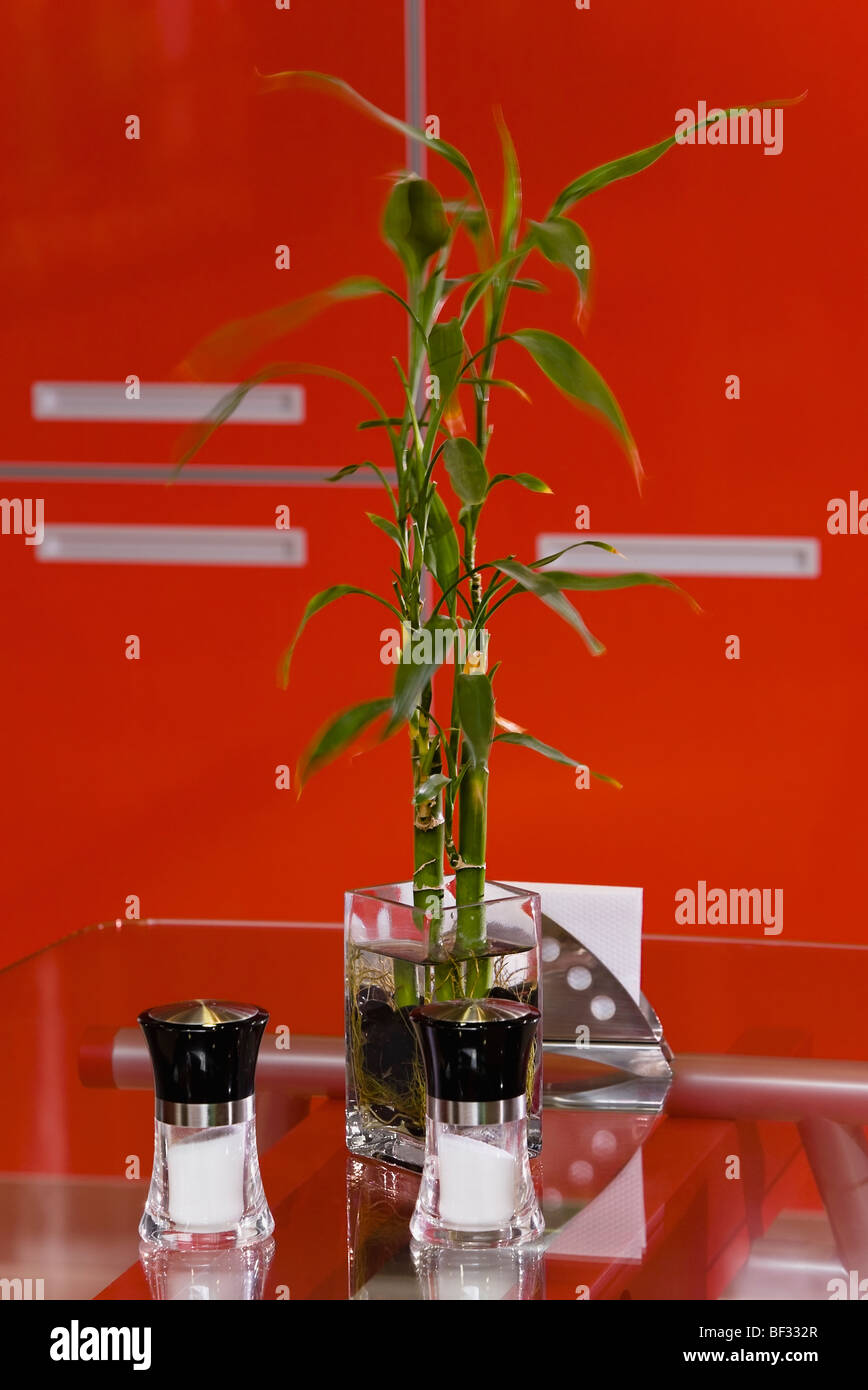 Lucky bamboo with two salt shakers on a table Stock Photo