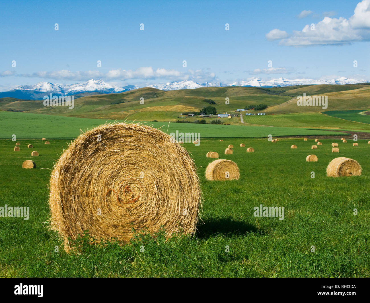 Agriculture - Round hay bales on an alfalfa field in the foothills of the Canadian Rockies in the distance / Alberta, Stock Photo