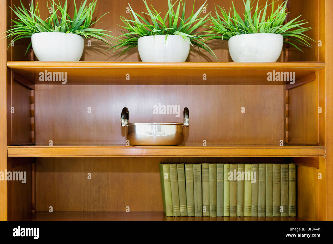 Potted plant on a shelf - Stock Image