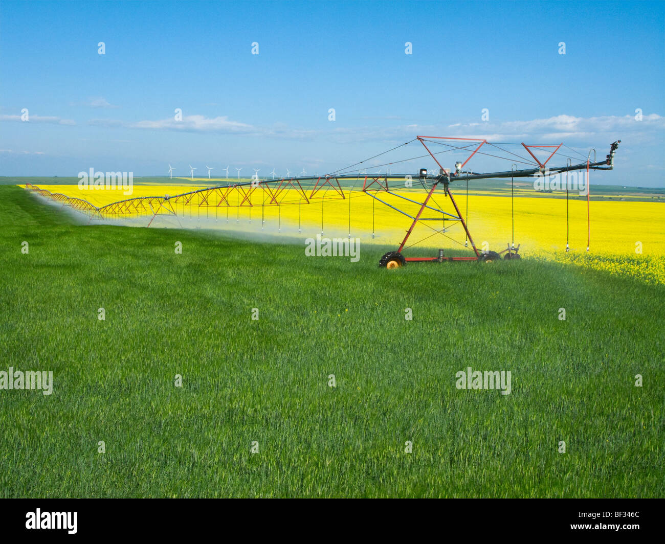 A center pivot irrigation system crossing from a blooming canola field to an adjoining cereal grain field / Alberta, - Stock Image